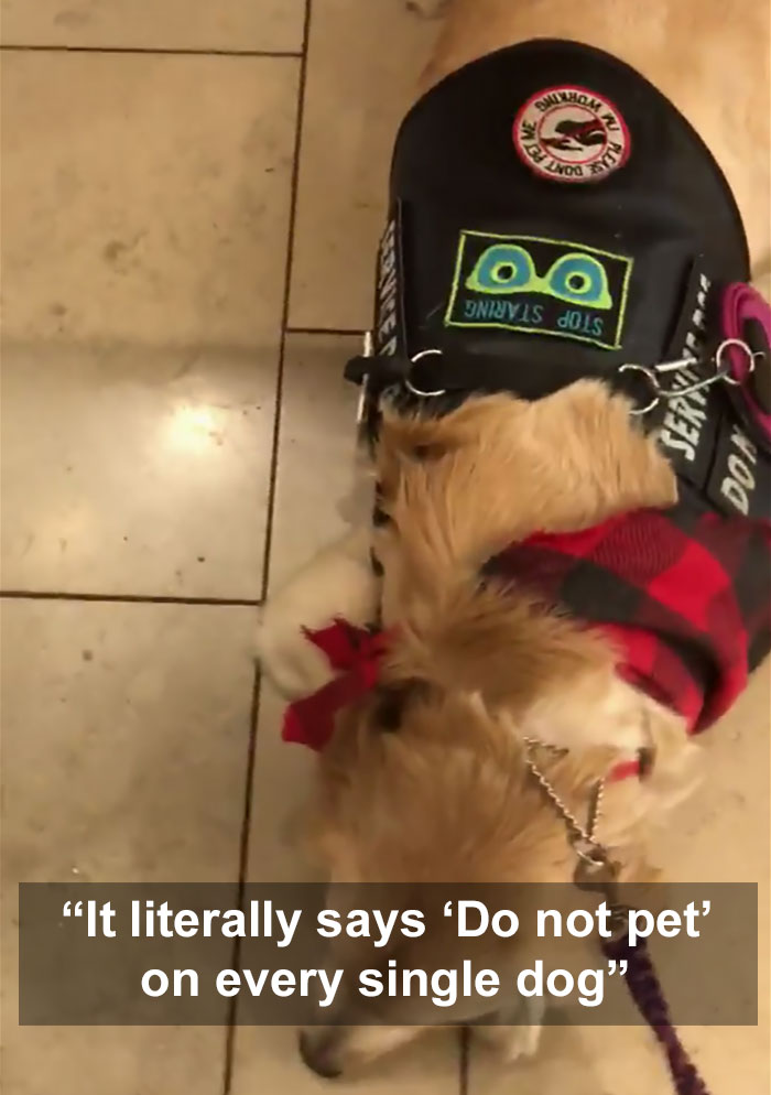 Mother Could Not Take 'No' For An Answer When She Asked Whether Her Daughter Could Pet Service Dogs