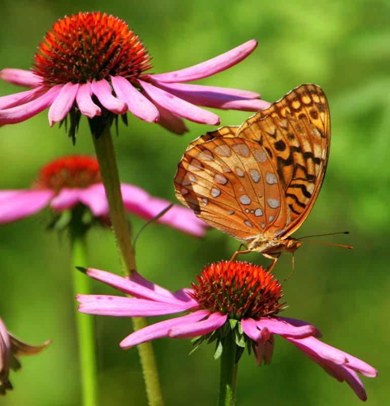 Wiersz Na Dobranoc Barwne Motyle
