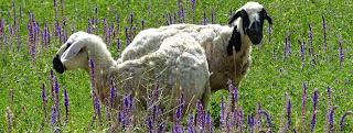 """Résultat de recherche d'images pour """"cuisine mouton aubergines iran"""""""