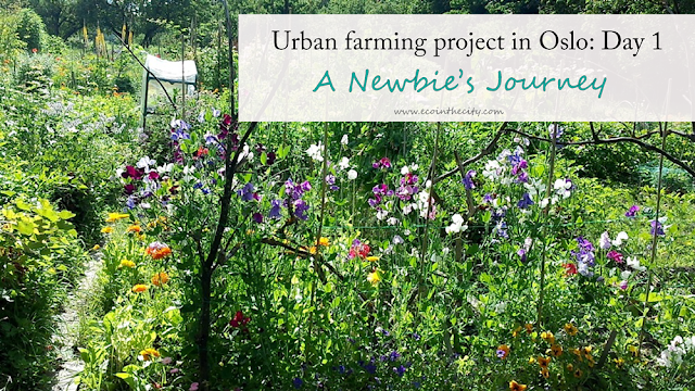 Urban gardening project in Oslo: day 1 - a newbie's journey