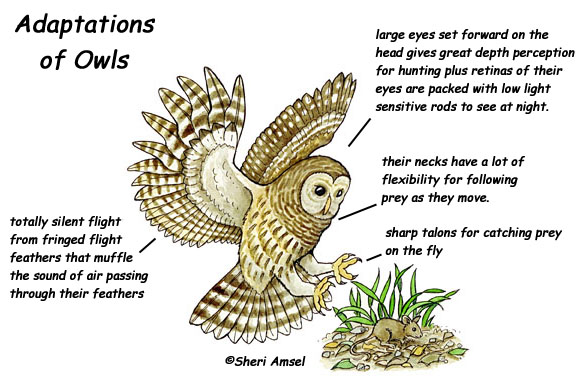 Adaptations of Desert Animals and Plants