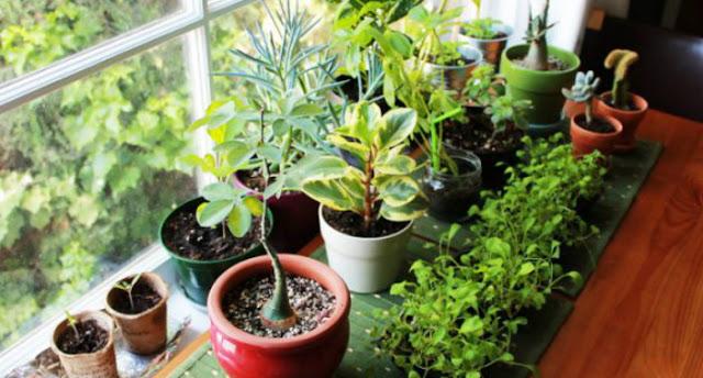 pozitif-enerji-veren-bitkiler.jpg