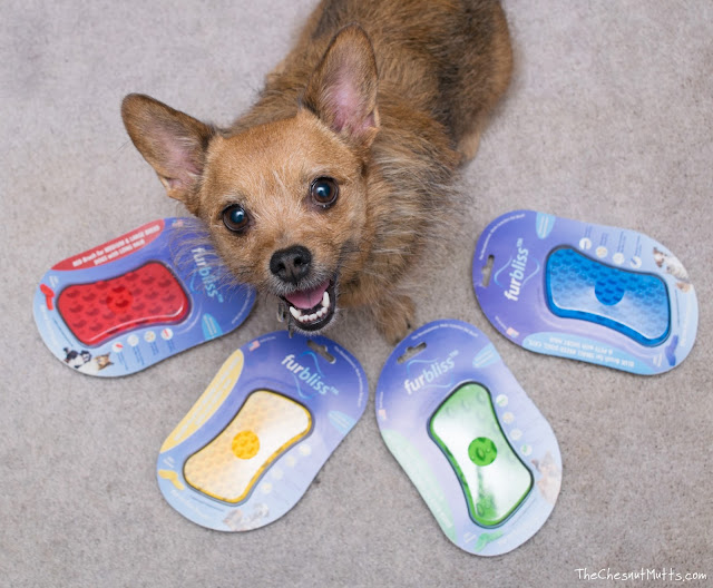 Jada surrounded by the types of Furbliss pet brushes