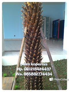 tukang taman murah menjual pohon palm kopernis harga paling murah juga menjual pohon pelindung, tanaman hias, rumput taman