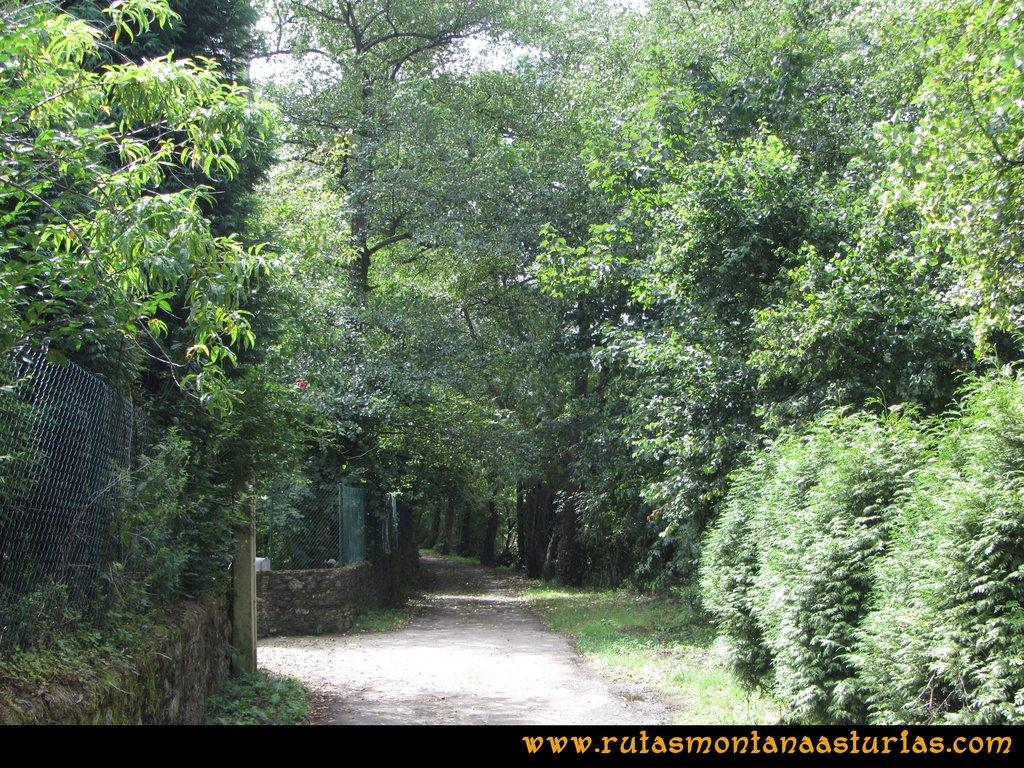 Ruta Cascadas Guanga, Castiello, el Oso: Camino entre La Riera y San Andrés