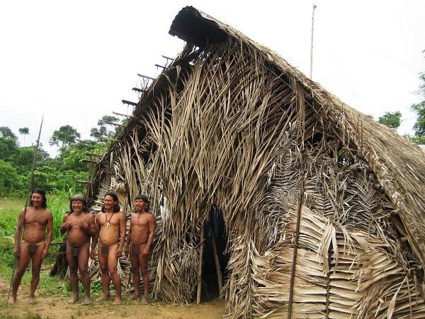 Bộ tộc Huaorani che tờ chim bằng lá cây 8