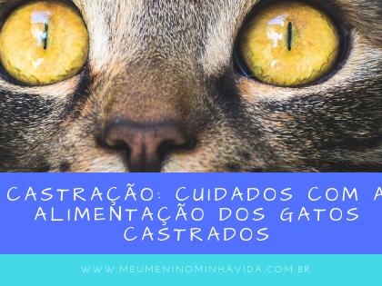 Castração: cuidados com a alimentação dos gatos castrados