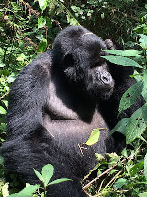 Uganda/Rwanda Double Gorilla Tracking – 6 Days Bwindi Impenetrable Forest,