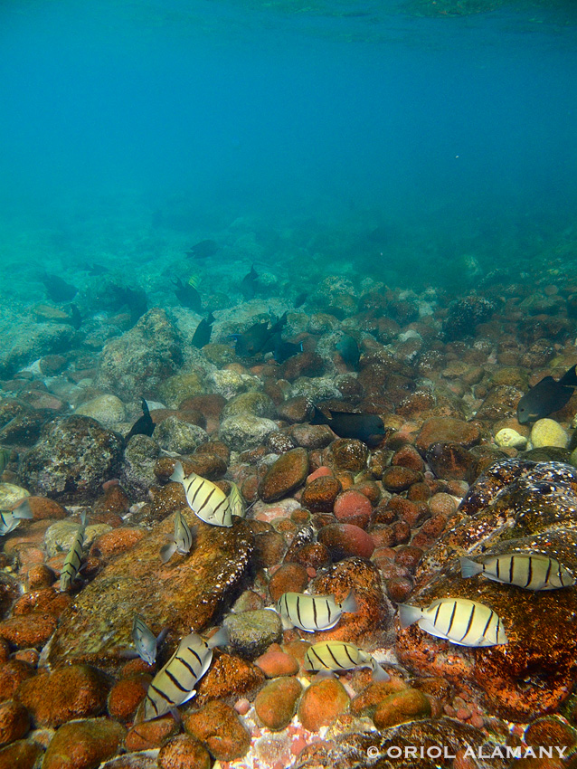Paisaje con peces en Dihamr Isla de Socotra Yemen