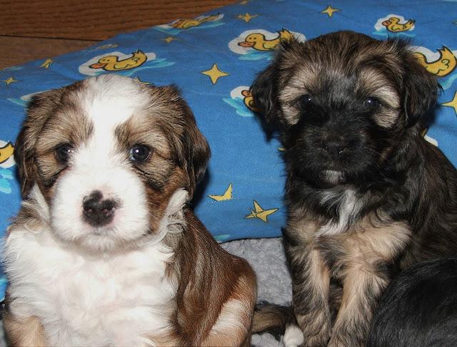 Chiru mit seinem Bruder Donka