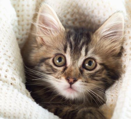 Descrizione di un gatto oggettiva - Gatto disegno modello di gatto ...