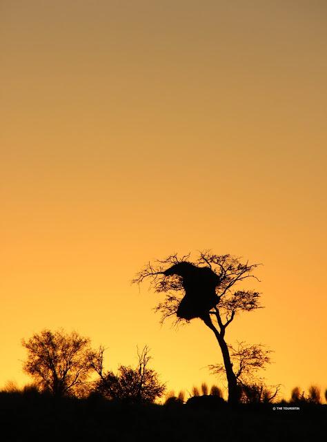 Silhouettes of trees at a deep orange sunrise.