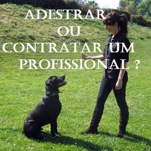 Estando bem orientado, você mesmo pode adestrar seu cachorro. No entanto, algumas pessoas preferem contratar um profissional para treinar o cachorro.  O treinador pode ir até à sua casa e treinar o cachorrinho para você, ou você pode mandá-lo à alguma escola especializada em adestramento por um determinado tempo. Mesmo sendo em uma escola, os donos podem, e devem,  acompanhar o adestramento.  Lembre-se: é mais provável que seu pet o veja como mestre se você estiver diretamente envolvido com o processo de treinamento. Mesmo porque, treinamento de obediência estreita os laços dono-cachorro.