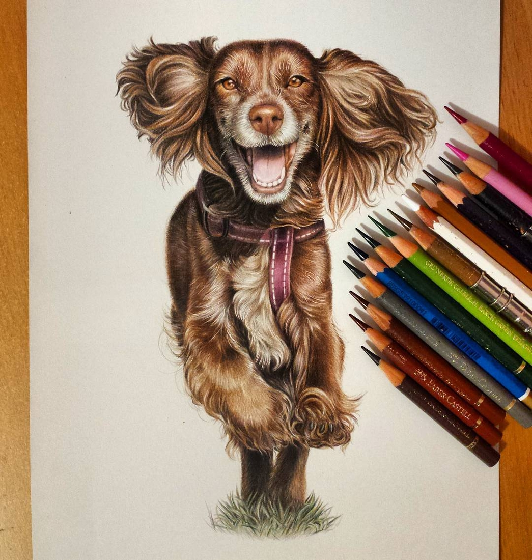 03-Running-Dog-Tatjana-Bril-Domestic-and-Wild-Animal-Drawings-www-designstack-co