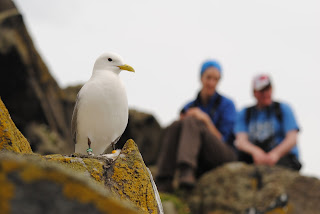 Kittiwake with SOC leader Eilidh and course participant, Ptolemy