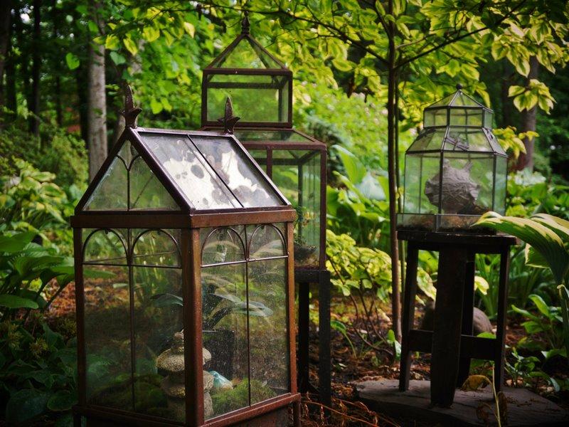 terrario de hierro y cristal con plantas dentro