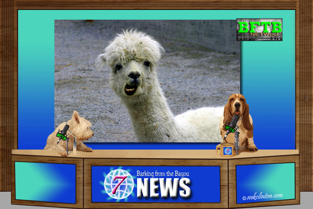 BFTB NETWoof News reports on unusual guard animals