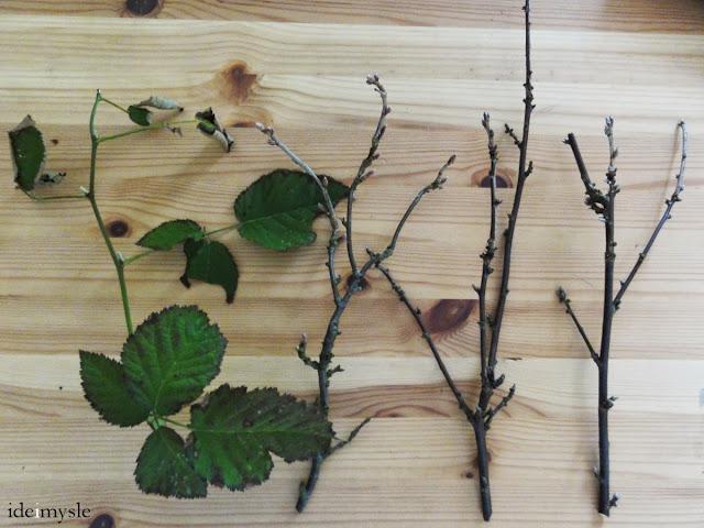 porzeczka czarna, porzeczka czerwona, porzeczka biała, jeżyna, zioła lecznicze, redcurrant twig, blackcurrant twig, whitecurrant twig, blackberry twig