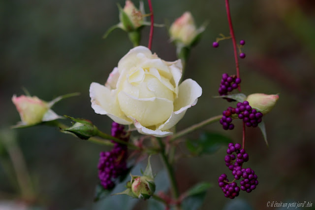 rosier crystalline blanc valérie swane