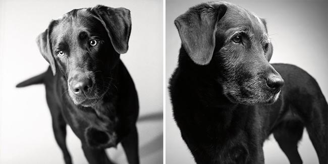 Dog Years Pictures Of Aging Dogs That Will Make Dog Lovers Cry - Corbet: Two years and 11 years