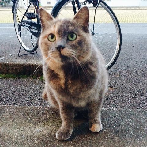 今年2月に撮影したサビ猫