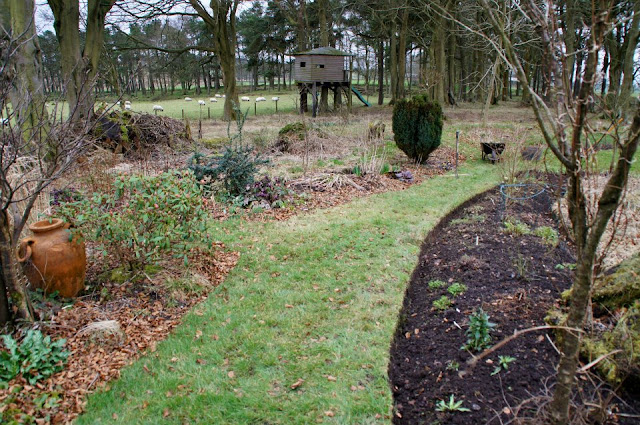 In my last garden, tidying the woodland garden, before on the left and after on the right
