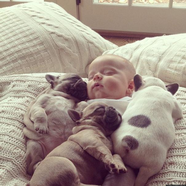 bulldog-puppy-cute-dog-photography-3