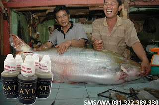Umpan Untuk Ikan Patin Babon Master Essen Katilayu