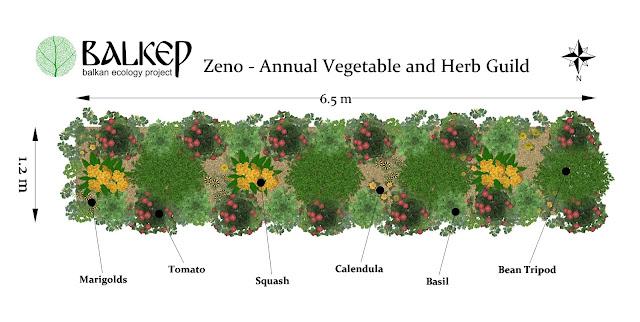 Zeno%2Bplanting%2Bscheme.jpg