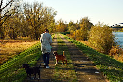 Dog Training Obedience – Easy To Understand Methods