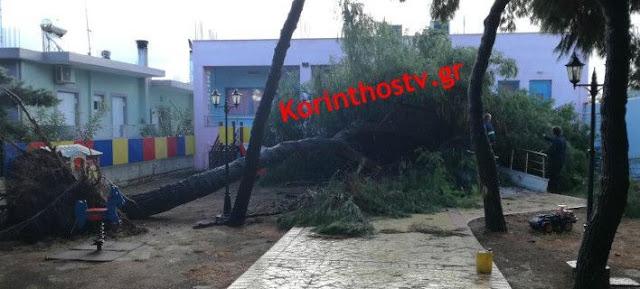 Παραλίγο τραγωδία από πτώση δέντρου σε νηπιαγωγείο στη Κόρινθο
