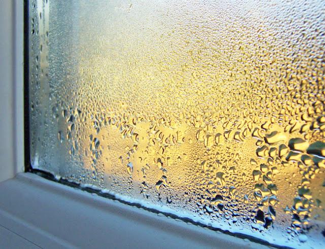 Jak zlikwidować wilgoć w domu - odgrzybianie i usuwanie pleśni ze ścian
