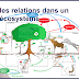 """""""les relations dans un écosystème"""""""