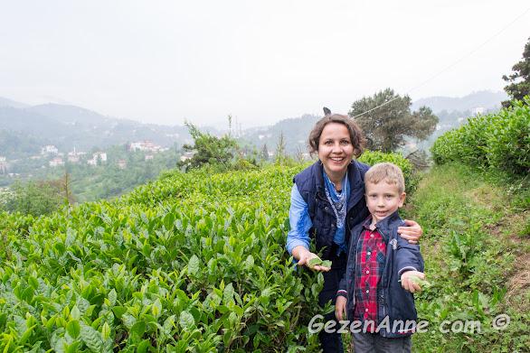 çay bitkileri yanında oğlumla, Ziraat Botanik Çay bahçesi Rize