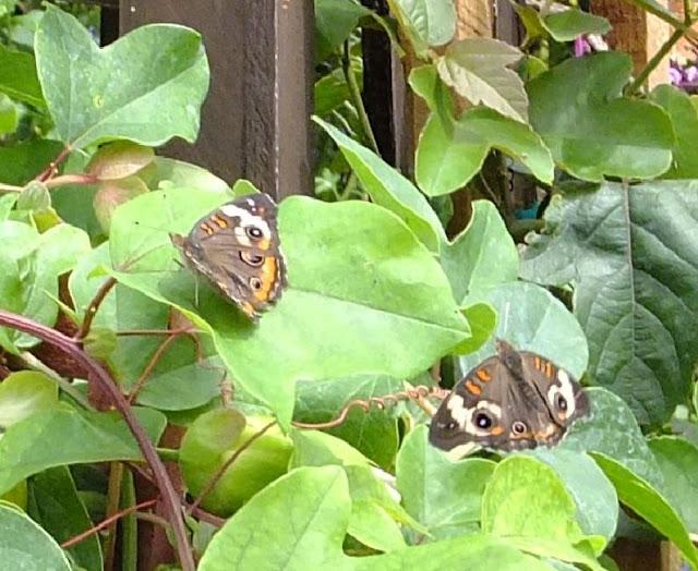 Butterflies at EPCOT