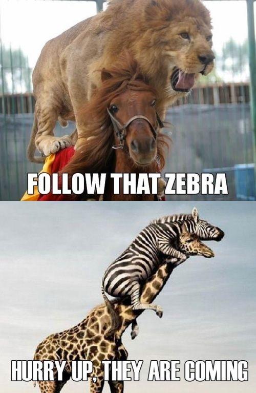 funny giraffe jokes - photo #33