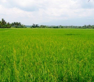 Refocusing Agriculture in the Philippines