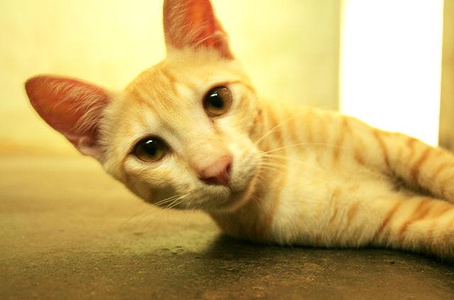 top 10 cat myths