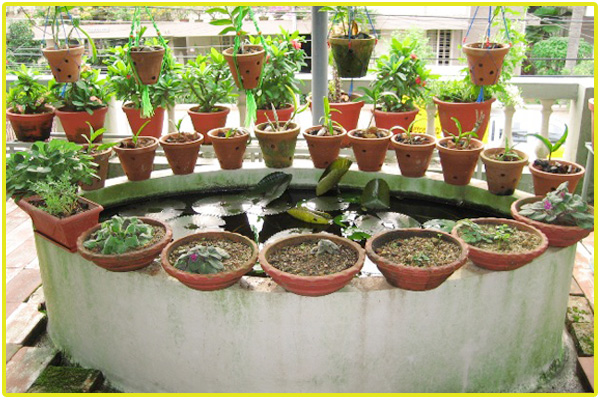 Rapid Growth Of Kitchen Garden In Chennai