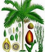 http://www.materisma.com/2014/03/ciri-ciri-tumbuhan-dikotil-dan.html