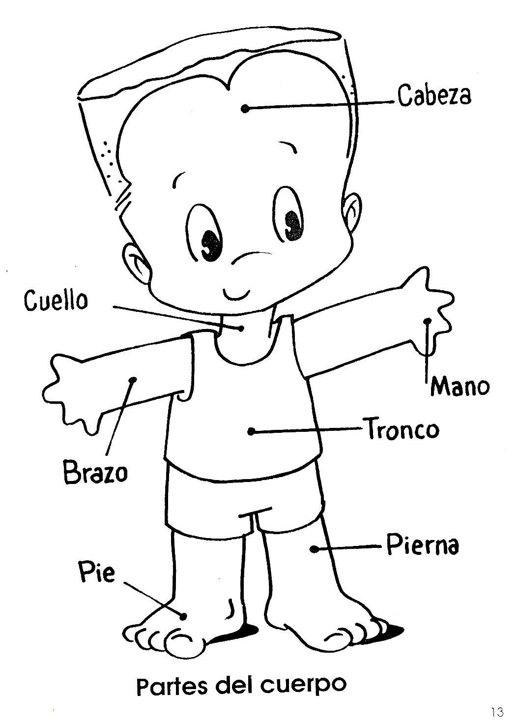 Fichas del cuerpo humano para infantil