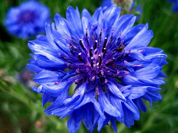 çiçek çeşitleri resimleri