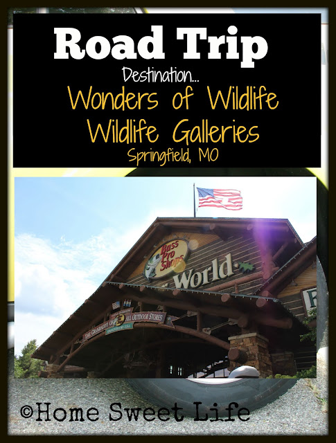 Wonders of Wildlife, Johnny Morris, Wildlife Galleries, Springfield MO, road trip, family trip, Bass Pro Shops
