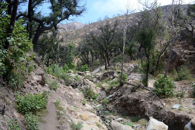 thin trail along the creek cut