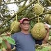 Super Mahal, Durian Ini Dilelang Rp 31 Juta, Ini Spesialnya..