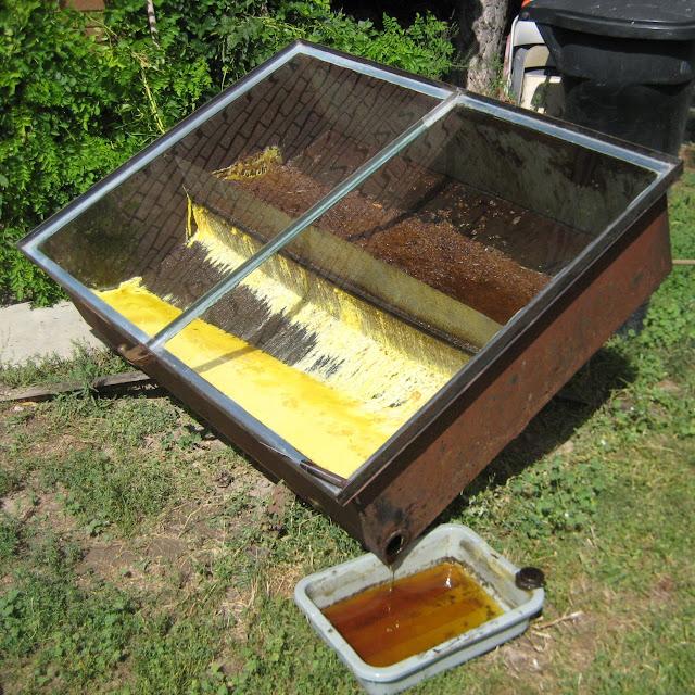 Συμβουλές για άμεσο δυνάμωμα των μελισσών: Άρθρο που θα προκαλέσει αίσθηση