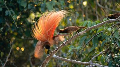 Berikut ini daftar lengkap jenis burung yang dilindungi di Indonesia Daftar Jenis Burung Yang Dilindungi Di Indonesia