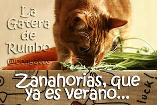 Gato Zanahorias Elmo Gatera de Rumbo