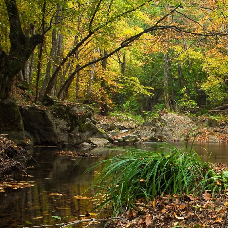 Fondo Pantalla Paisaje Dentro Del Bosque