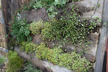 Shipping Pallet Vertical Planter - Soil Salad